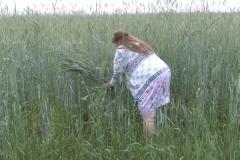 2020-06-15-abrad_rozgary-zazhynanne_zhytnyovaga_snapa-ag_lukoml-chashniczki_r-n.jpg